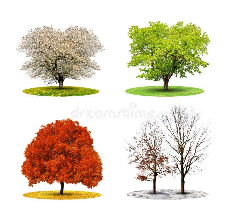 Drzewo w sezonie cztery zdjęcia royalty free