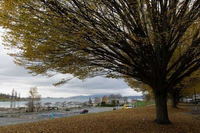 Drzewo w Vancouver fotografia royalty free