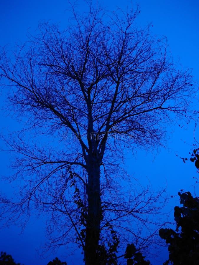 Drzewo w wieczór zdjęcia stock