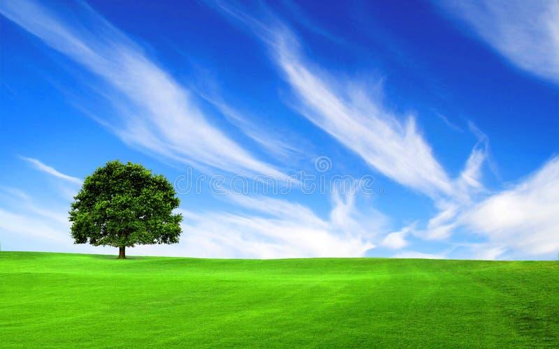 Download Drzewo w zielonym polu ilustracji. Ilustracja złożonej z paśnik - 28970962