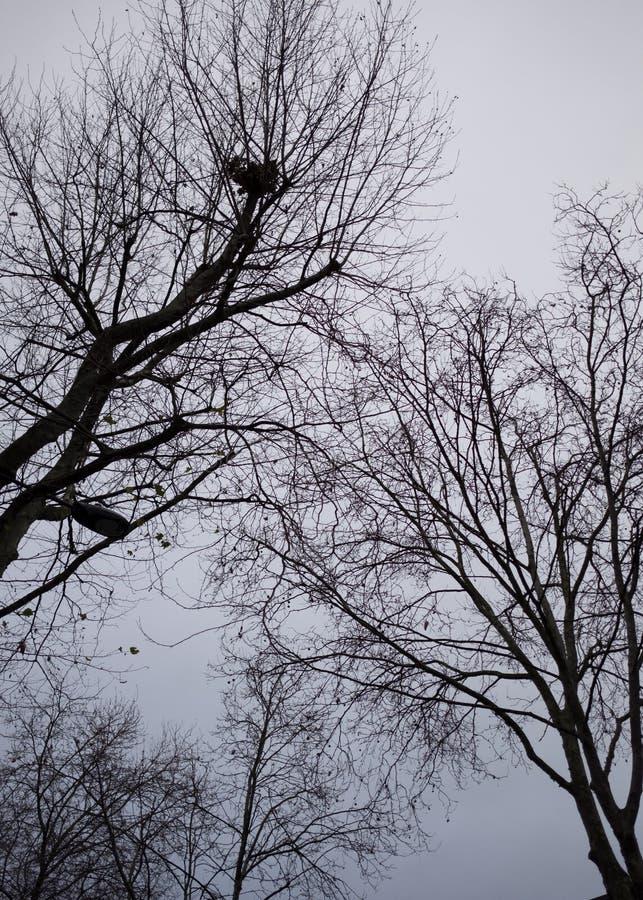 Drzewo w zimie przy Londyn zdjęcie royalty free
