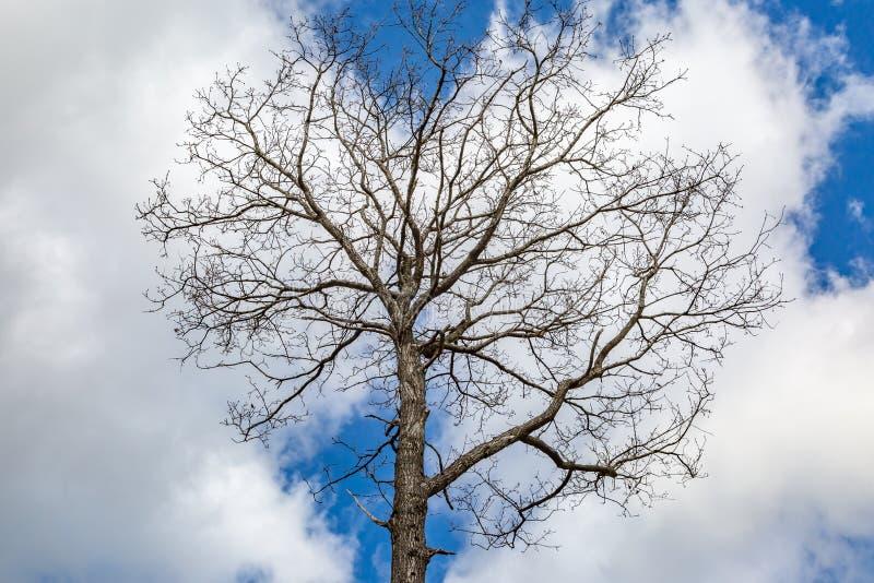 Drzewo w zimie obrazy stock