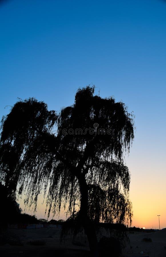 Drzewo w zmierzchu samotnie patrzeje zdjęcia royalty free