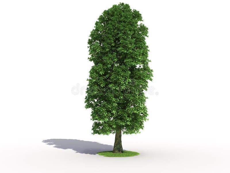 drzewo wapna ilustracja wektor