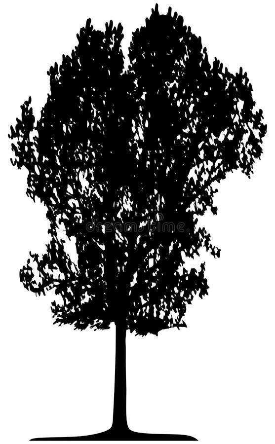 Drzewo (wektor) Bezpłatna Fotografia Stock