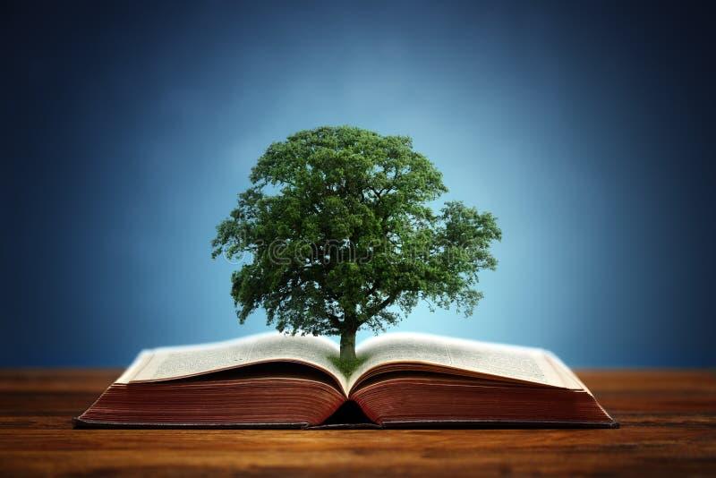 Drzewo wiedza fotografia royalty free