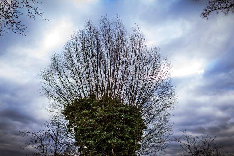 Drzewo wierzchołek z zielonymi liśćmi obraz stock