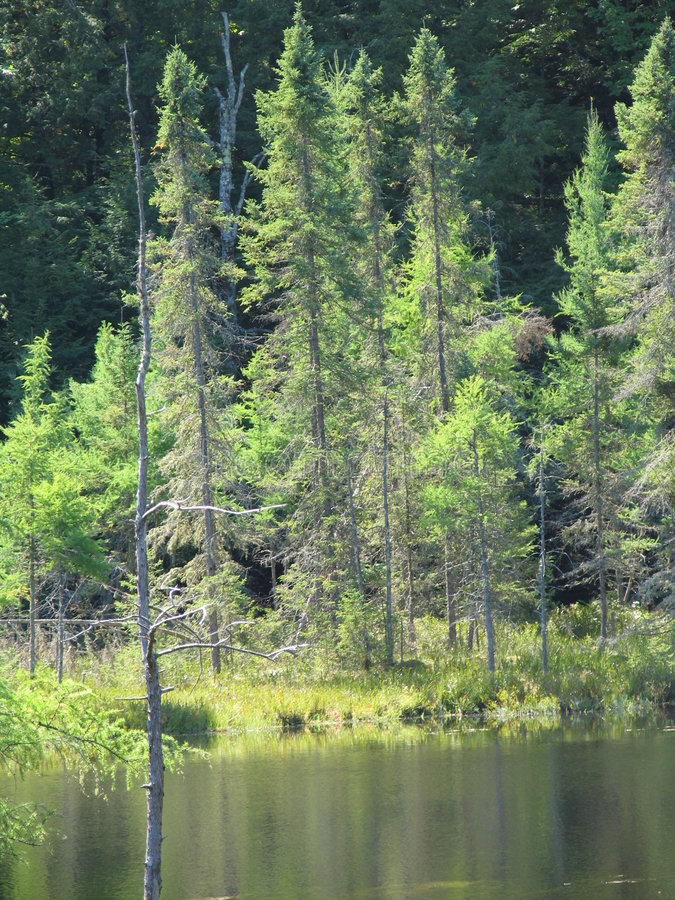 drzewo wody fotografia royalty free