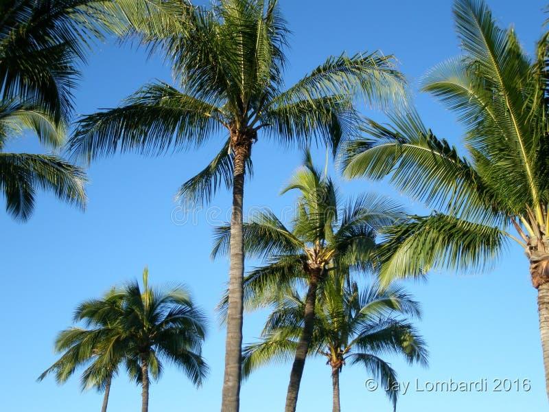 Drzewo wyspa Oahu Hawaje obraz stock