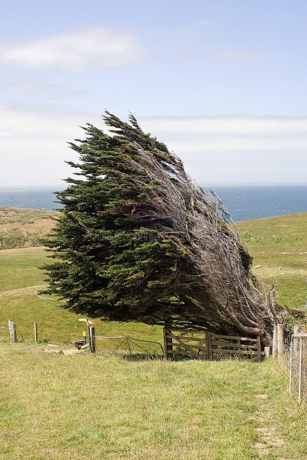 drzewo wystrzelony wiatr zdjęcie stock
