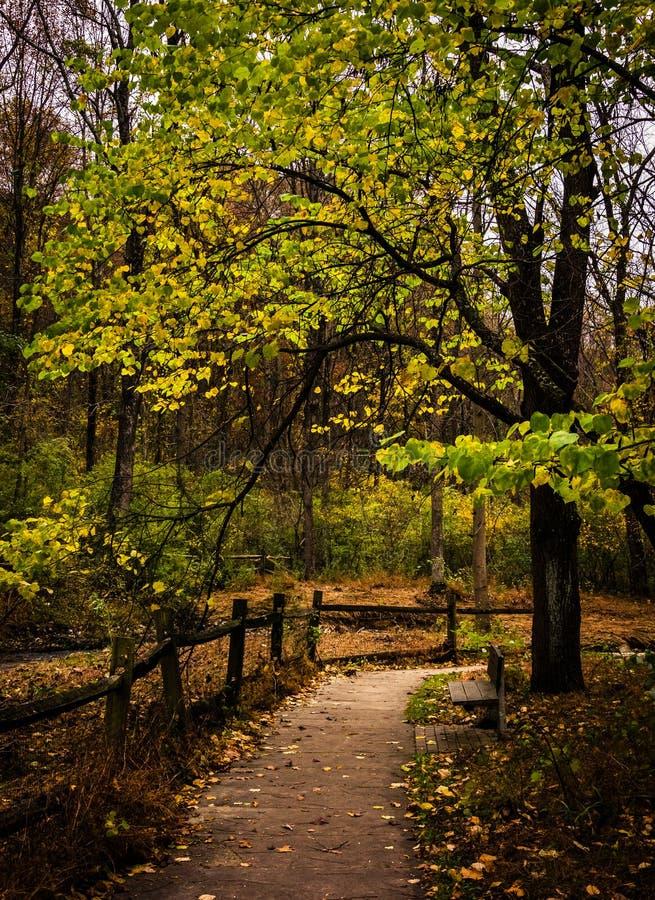 Drzewo wzdłuż ścieżki w Nixon parku blisko Jork, Pennsylwania zdjęcia royalty free