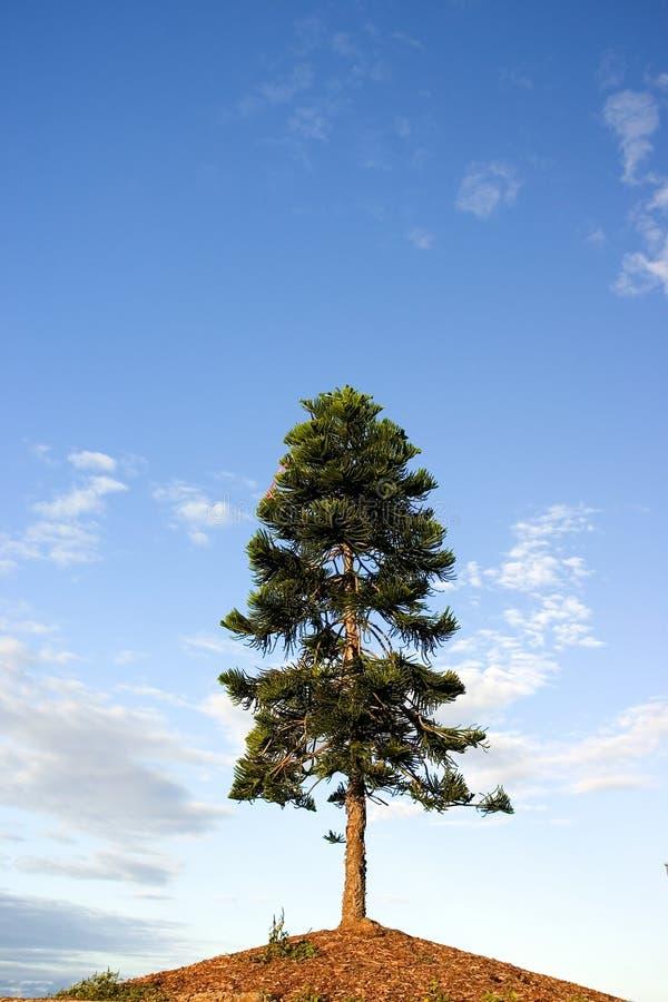 Download Drzewo wzgórza zdjęcie stock. Obraz złożonej z australia - 145022