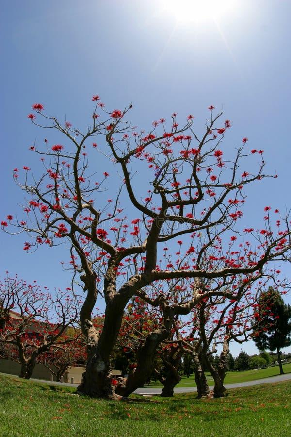 Drzewo życia Obraz Royalty Free