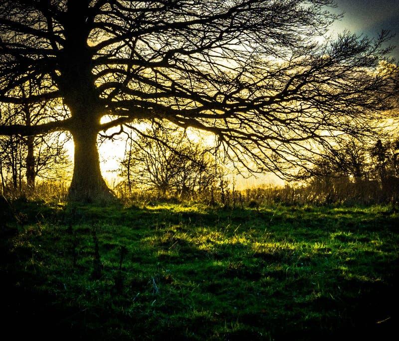 Drzewo ?ycie zdjęcie royalty free