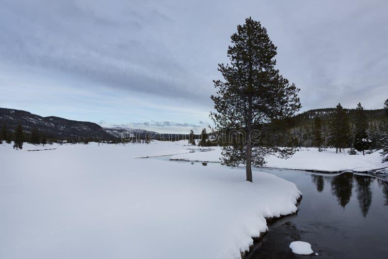 Drzewo, Yellowstone rzeka, zima, zdjęcia stock