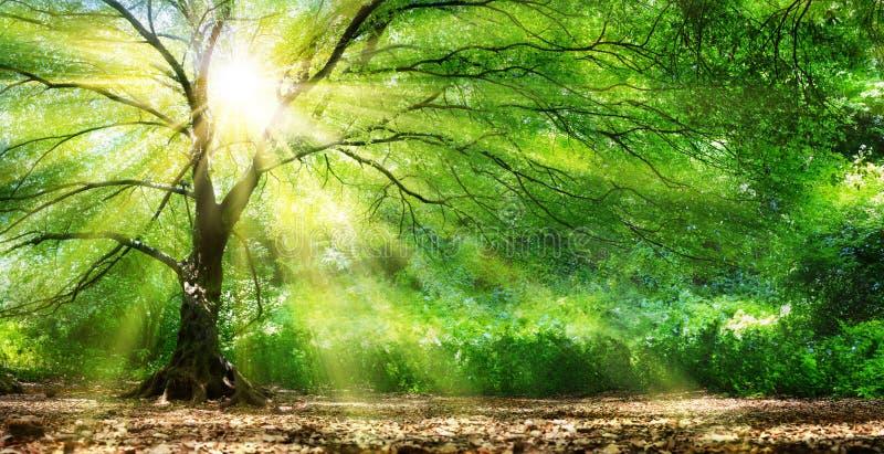 Drzewo Z światłem słonecznym W Dzikim lesie fotografia stock