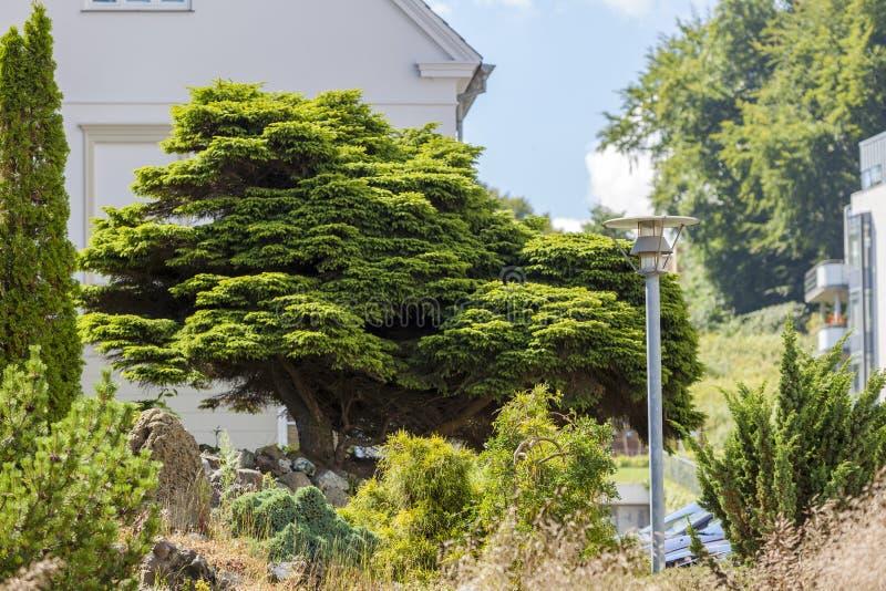 Drzewo z bielu domem na tle obraz royalty free