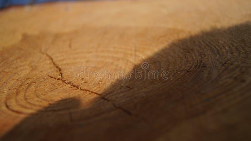 Drzewo z cieniem zdjęcie royalty free