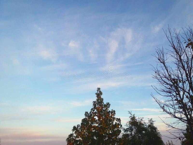 Drzewo z księżyc obrazy stock