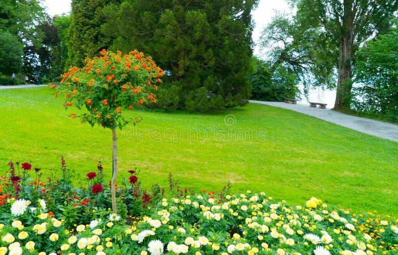 Drzewo z małymi pomarańczowymi kwiatami obraz stock