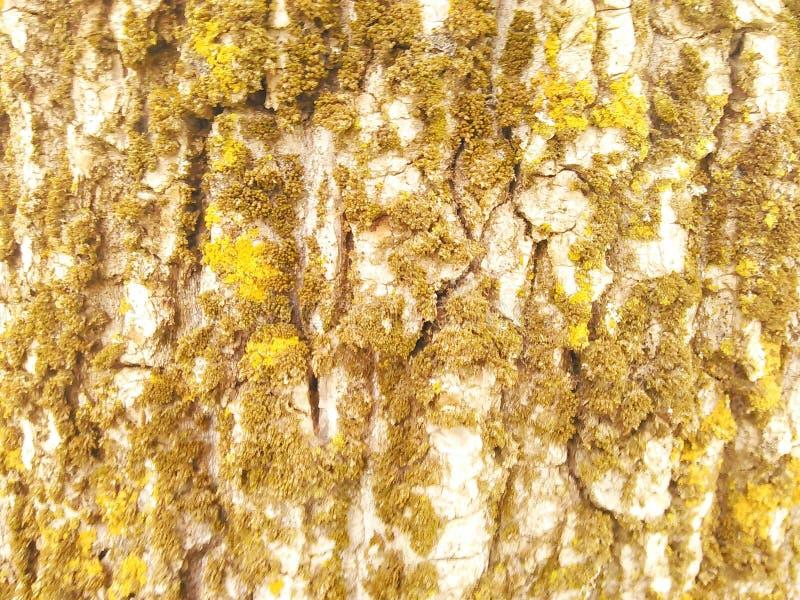 Drzewo z mech tłem obraz royalty free