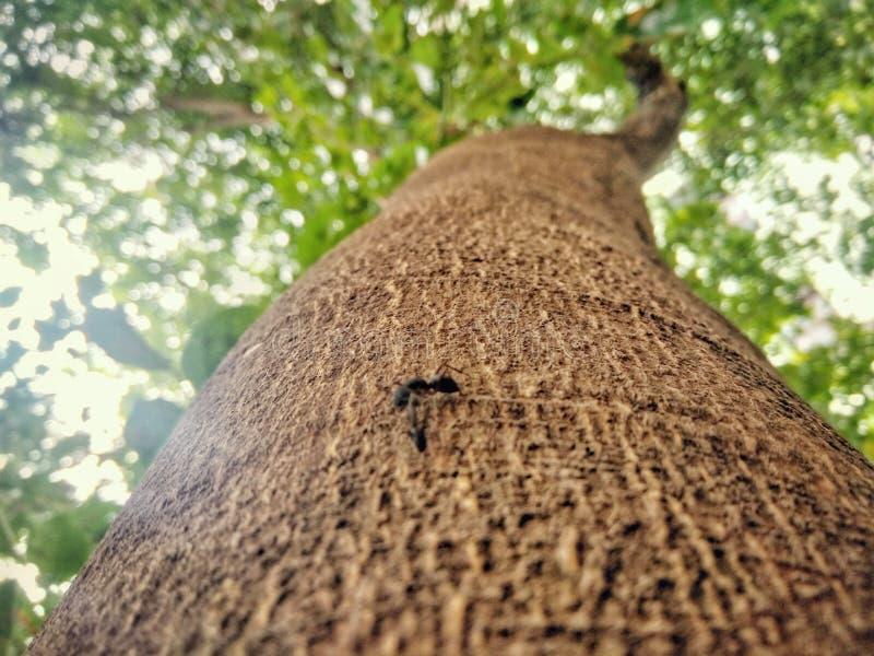 Drzewo z mrówką na nim obraz royalty free