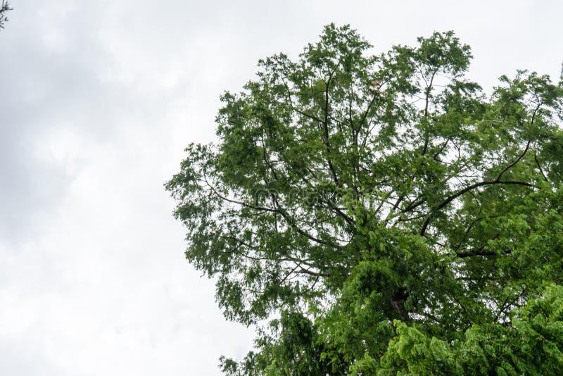 Drzewo z niebem i siwieje chmury zdjęcia stock