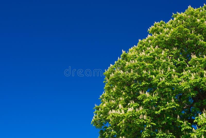 Drzewo z niebieskim niebem obraz stock