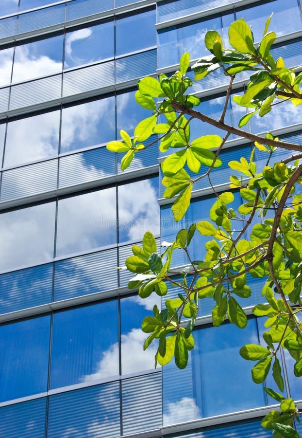 Drzewo z nowożytnym budynku i nieba odbiciem zdjęcia royalty free