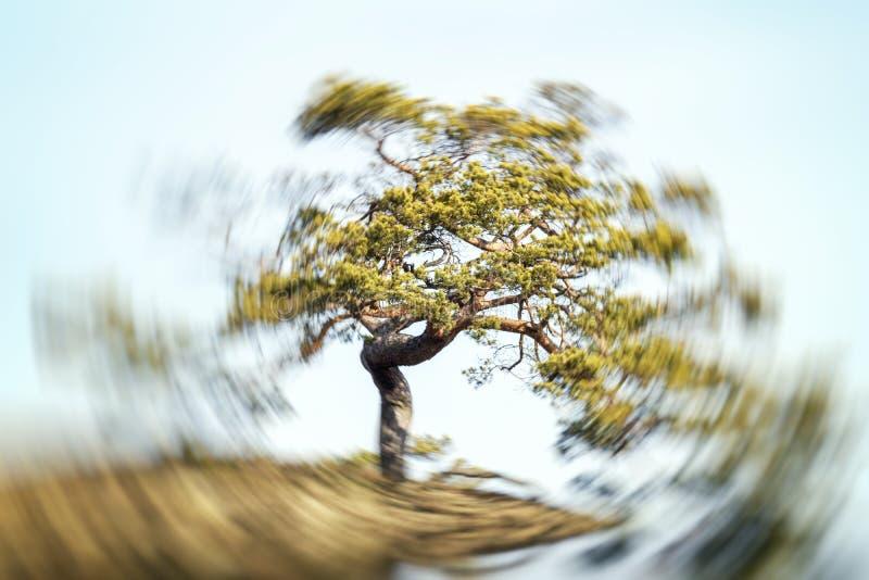 Drzewo z opromienioną władzą w vortex zdjęcie royalty free