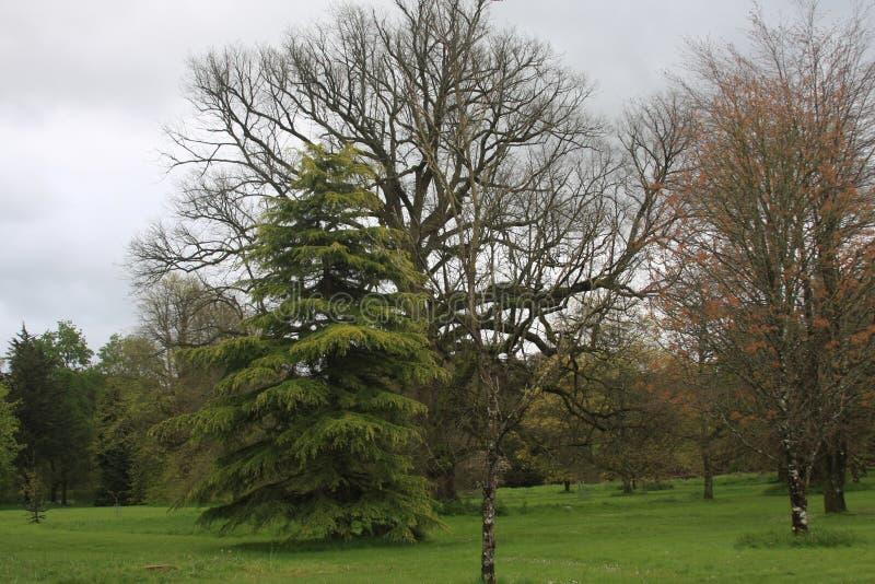 Drzewo z out opuszcza obraz stock