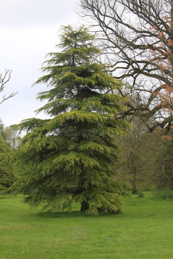 Drzewo z out opuszcza zdjęcia royalty free