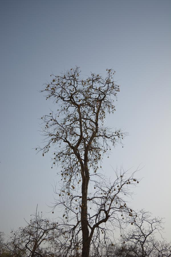 Drzewo z owoc obrazy stock