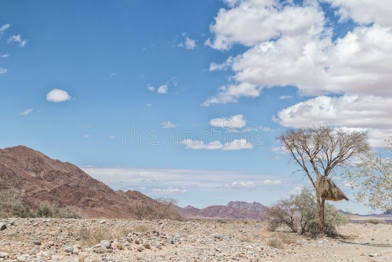 Drzewo z ptakami gniazduje z górami Namibia pustynia w tle zdjęcie royalty free