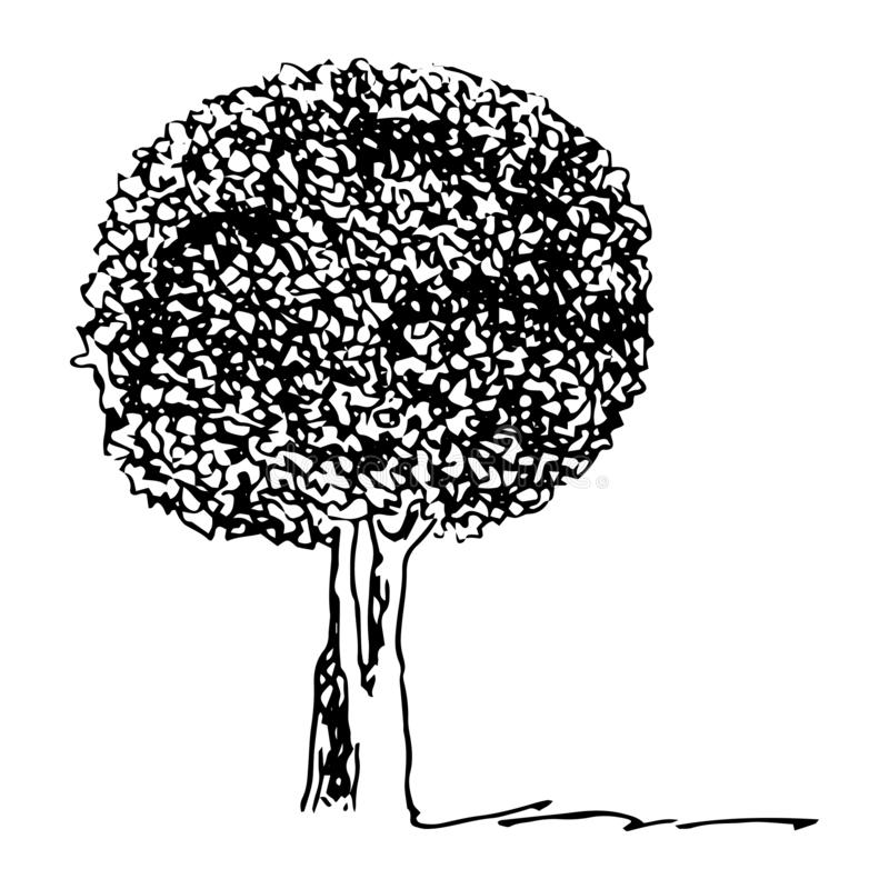 Drzewo z round koroną, grafika styl, konturu rysunek Odosobniona czarna sylwetka na bia?ym tle wektor ilustracja wektor