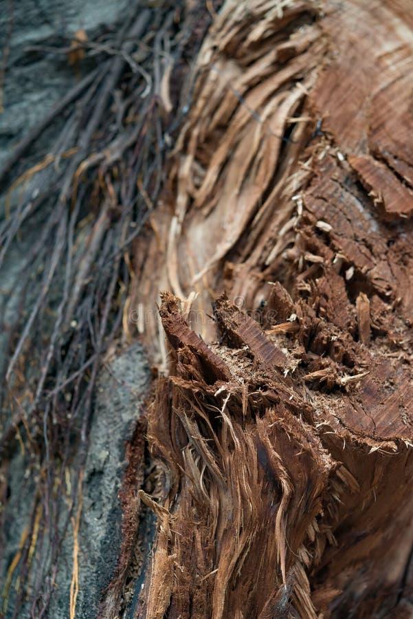 Drzewo z uszkadzającym barkentyny zakończeniem w górę vertical obraz royalty free