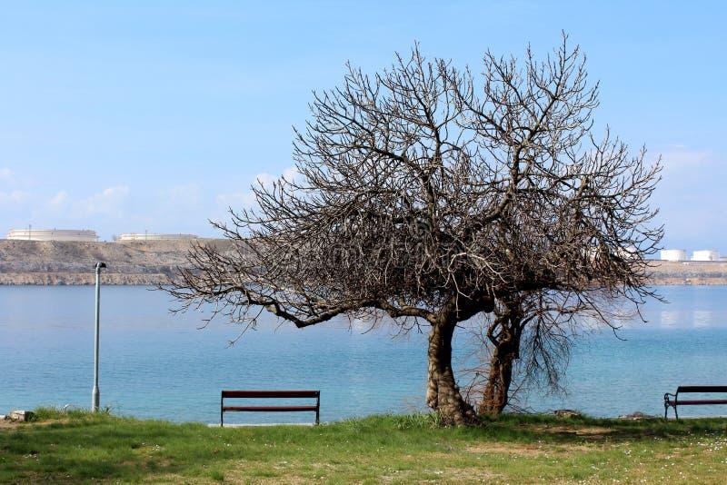 Drzewo z wielkim treetop i zwartymi gałąź zielonej trawy, społeczeństwa i przemysłowym kompleksem i spokojem obok ławek z bez liś fotografia royalty free