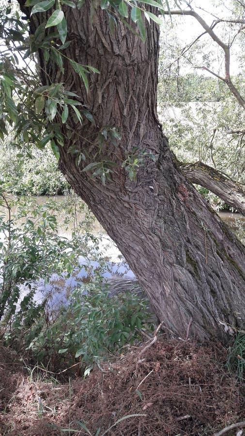 Drzewo z wzorzystą barkentyną rzecznym Rother fotografia royalty free