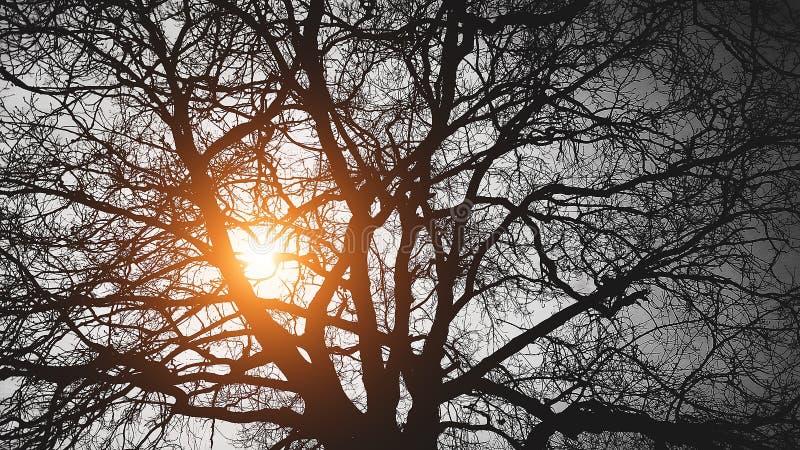 Drzewo za słońcem na czarnym tle obrazy stock