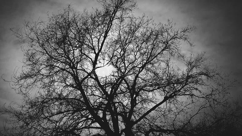 Drzewo za słońcem na czarnym tle obraz stock