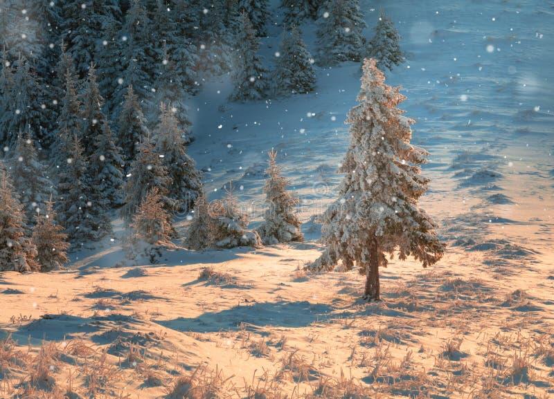 Drzewo zakrywający w śnieżnym spadku podczas pięknego wschód słońca malowniczy zimy tło obrazy stock