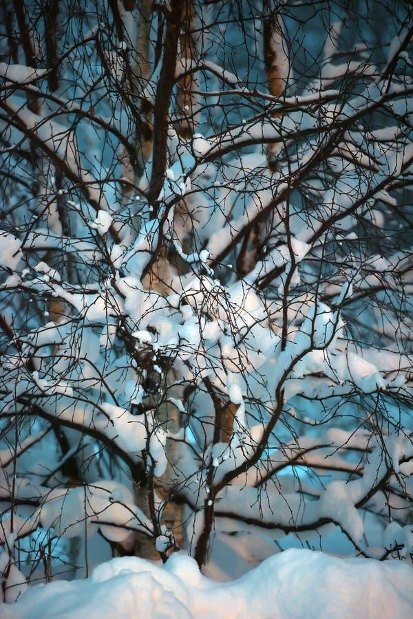 Drzewo zakrywający z śniegiem w zmroku obraz royalty free