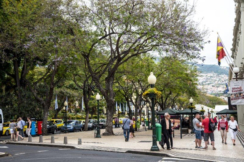 Drzewo zakupy Prążkowane Główne ulicy w Funchal maderze Portugalia fotografia stock