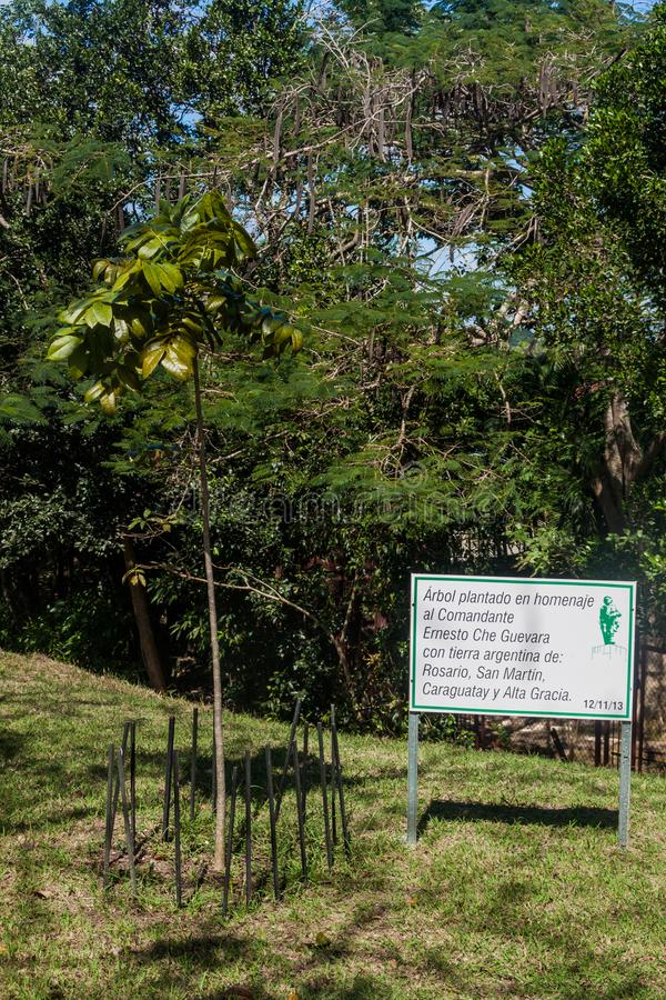 Drzewo zasadzający jako hołd Che Guevara z ziemią od Argentyna w Santa Clara, Cu obraz stock