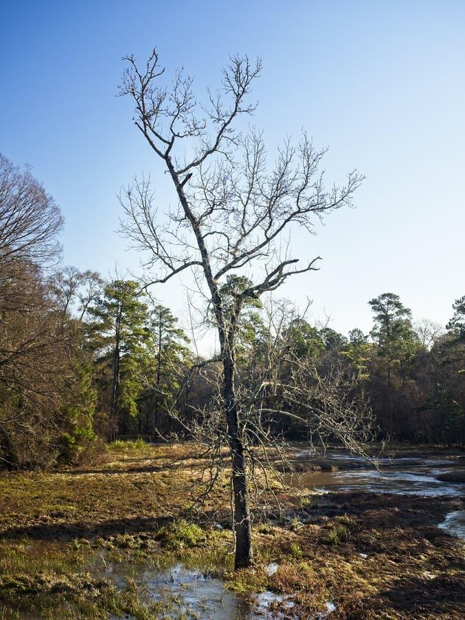 Drzewo zatoczki spływaniem fotografia stock
