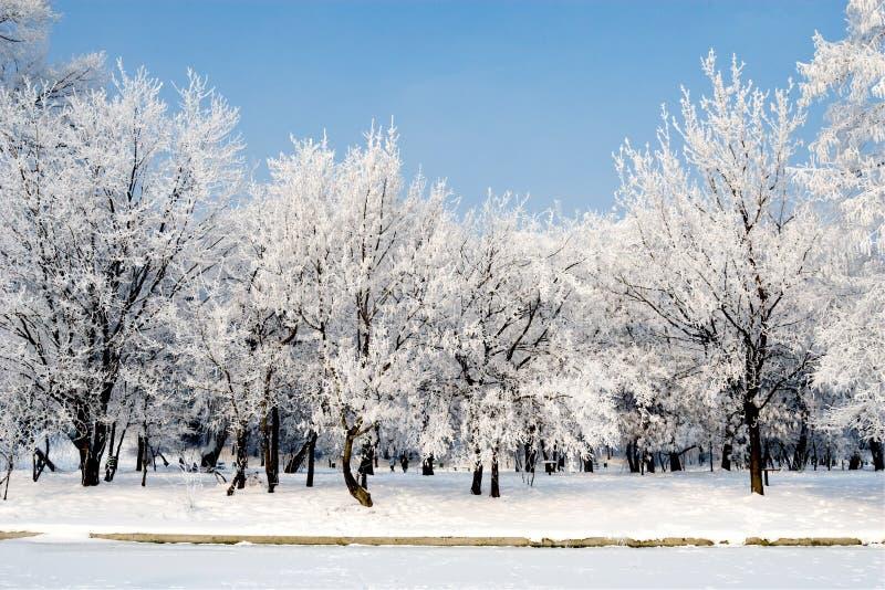drzewo zima obraz royalty free