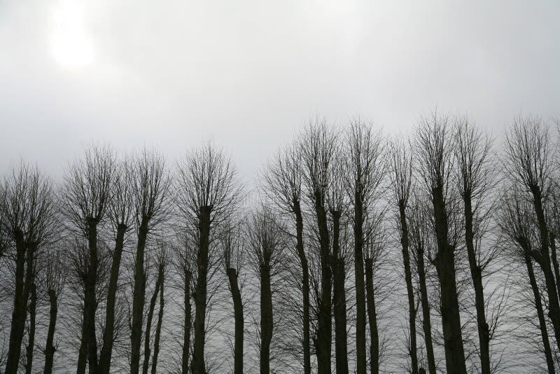 drzewo zimy. zdjęcia royalty free