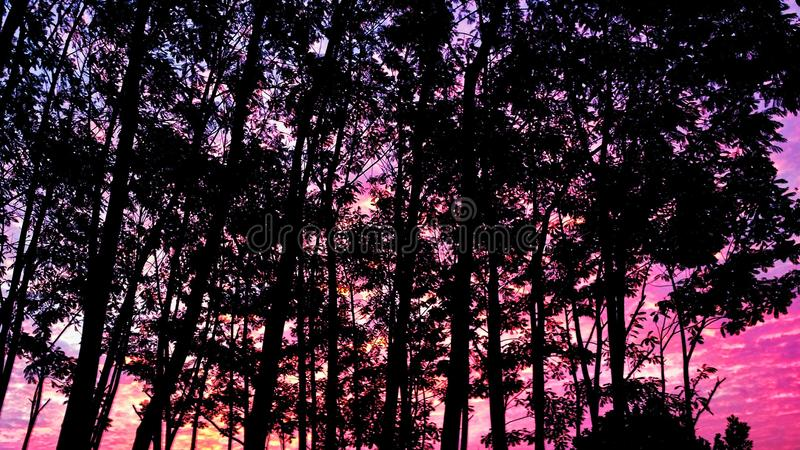 Drzewo zmierzch obraz stock