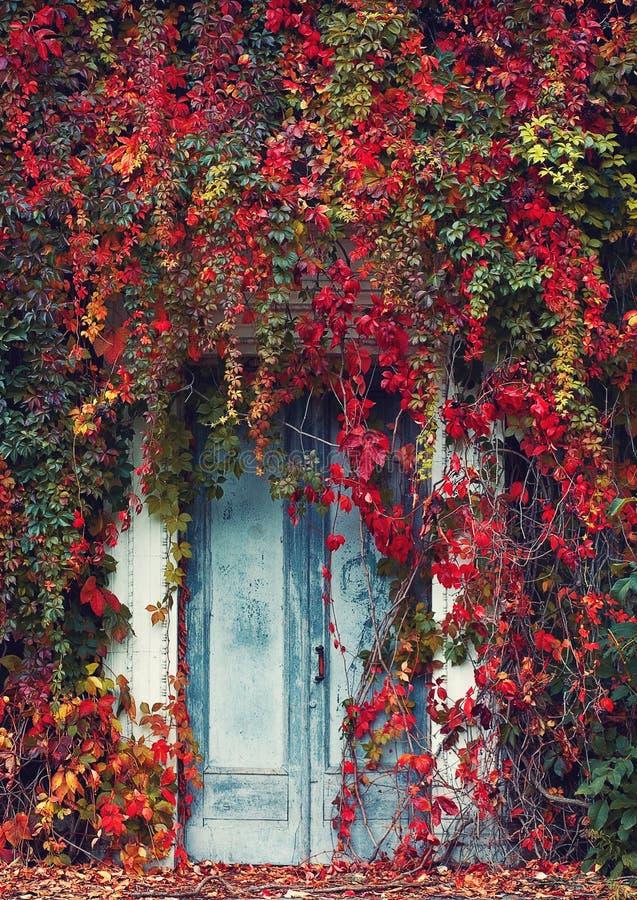 Drzwi z Dzikimi winogronami zdjęcia stock