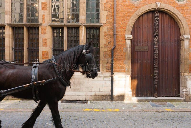 drzwiowego końskiego moretus muzealna plantin strona obrazy royalty free
